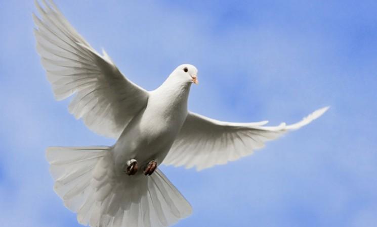 Morituri te salutant, libertas! (5)